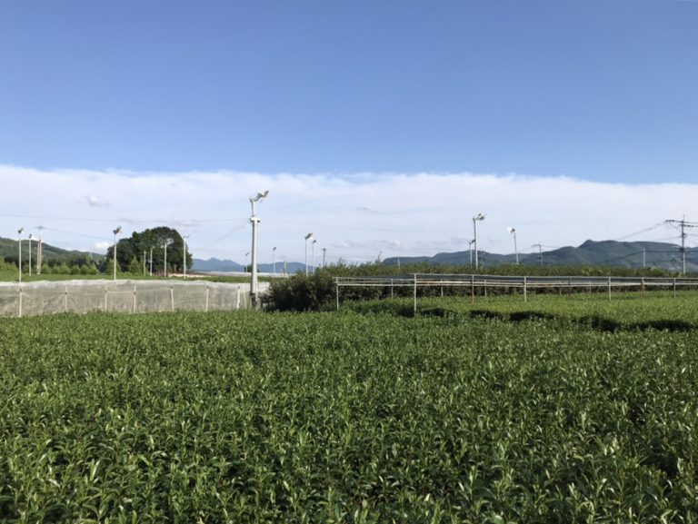 福岡県が公募した「八女伝統本玉露IoTシステム開発・実証事業」を受注
